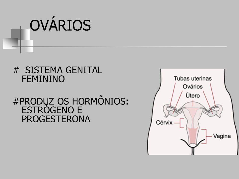 OVÁRIOS # SISTEMA GENITAL FEMININO #PRODUZ OS HORMÔNIOS: ESTRÓGENO E PROGESTERONA