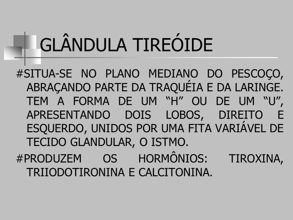 GLÂNDULA TIREÓIDE #SITUA-SE NO PLANO MEDIANO DO PESCOÇO, ABRAÇANDO PARTE DA TRAQUÉIA E DA LARINGE.