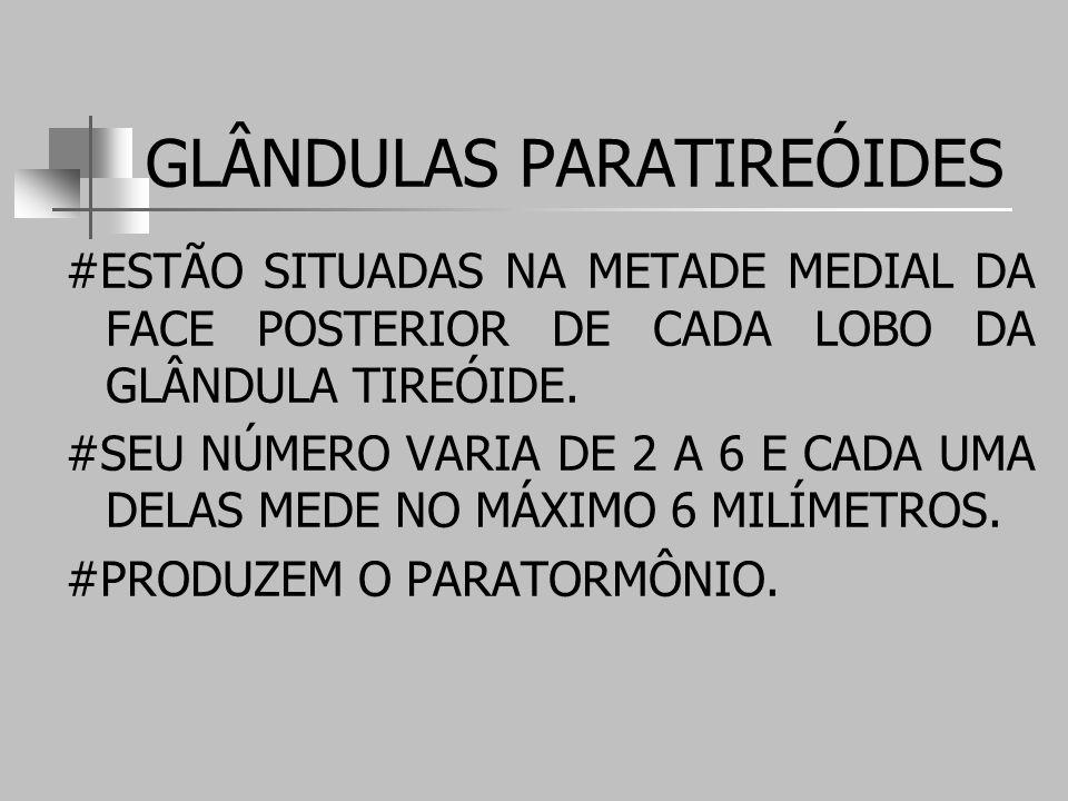 GLÂNDULAS PARATIREÓIDES #ESTÃO SITUADAS NA METADE MEDIAL DA FACE POSTERIOR DE CADA LOBO DA GLÂNDULA TIREÓIDE.
