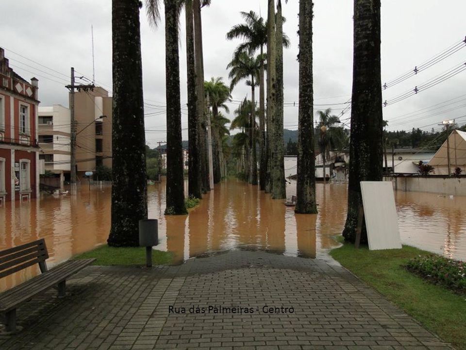 Rua das Palmeiras - Centro