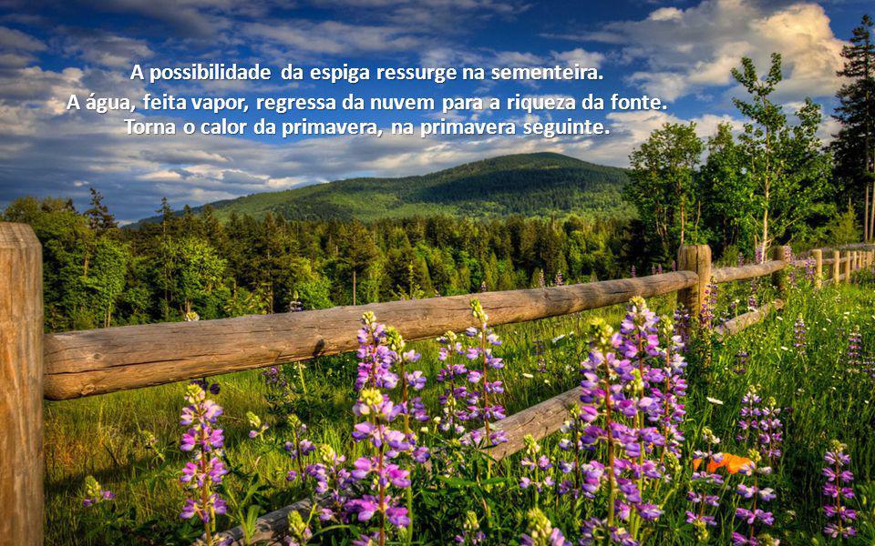 Colheste abandono. Padeceste desilusão. Entretanto, recomeçar é benção na Lei de Deus.