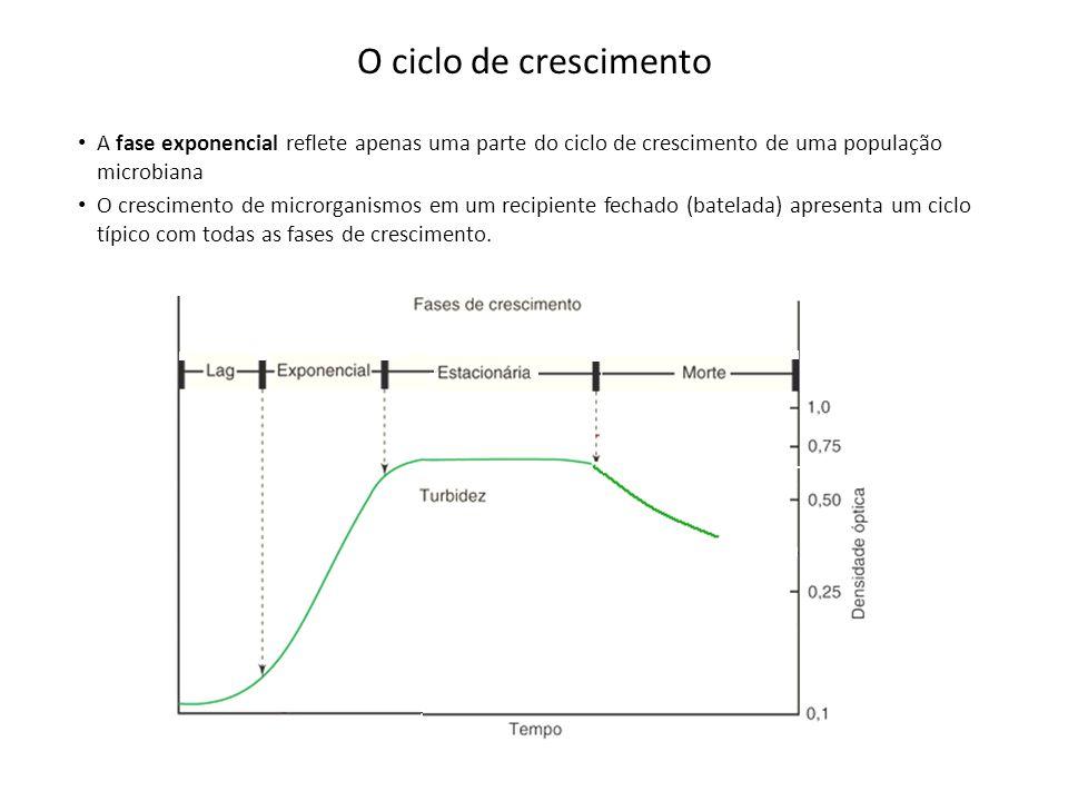 O ciclo de crescimento A fase exponencial reflete apenas uma parte do ciclo de crescimento de uma população microbiana O crescimento de microrganismos em um recipiente fechado (batelada) apresenta um ciclo típico com todas as fases de crescimento.