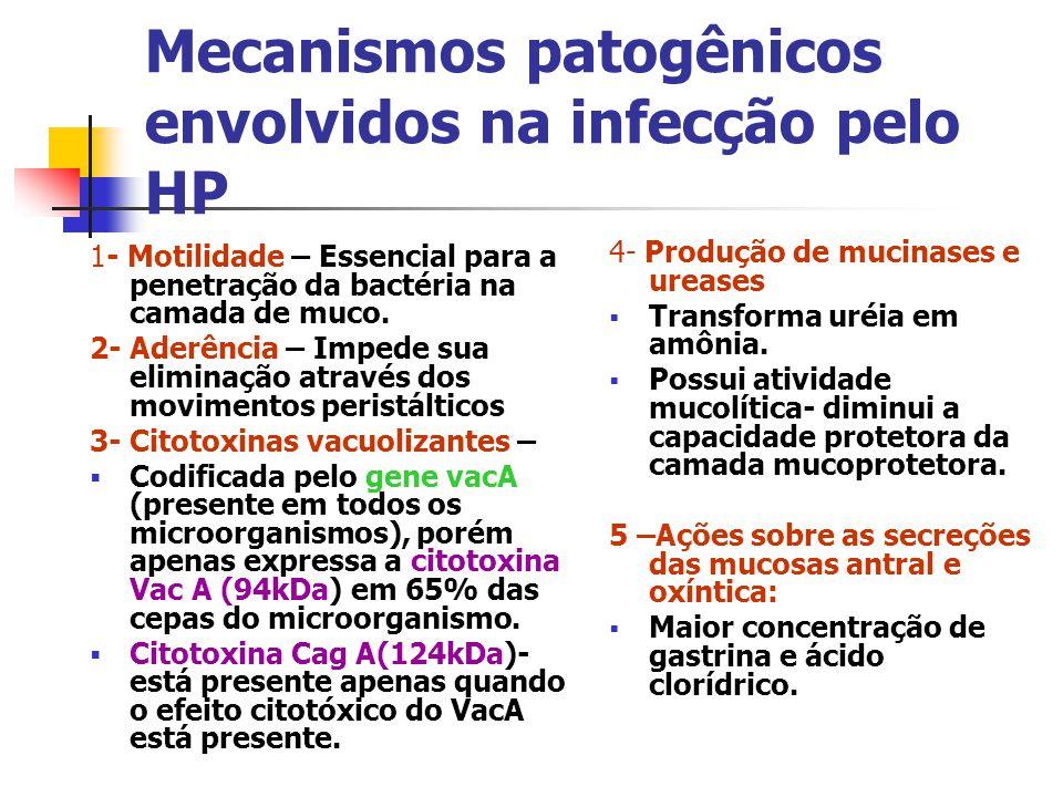 Mecanismos patogênicos envolvidos na infecção pelo HP 1- Motilidade – Essencial para a penetração da bactéria na camada de muco. 2- Aderência – Impede