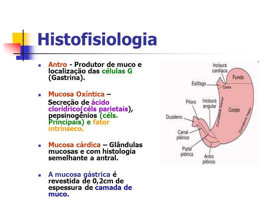 Histofisiologia Antro - Produtor de muco e localização das células G (Gastrina). Mucosa Oxíntica – Secreção de ácido clorídrico(céls parietais), pepsi