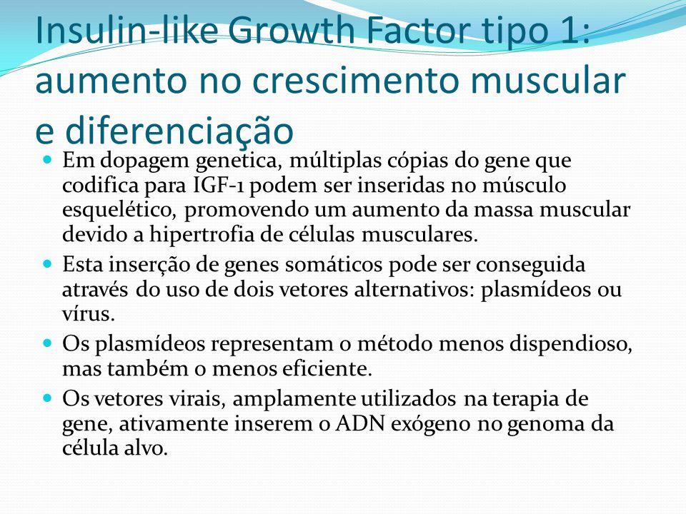 Insulin-like Growth Factor tipo 1: aumento no crescimento muscular e diferenciação Em dopagem genetica, múltiplas cópias do gene que codifica para IGF-1 podem ser inseridas no músculo esquelético, promovendo um aumento da massa muscular devido a hipertrofia de células musculares.