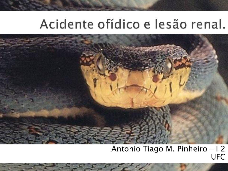 Antonio Tiago M. Pinheiro – I 2 UFC