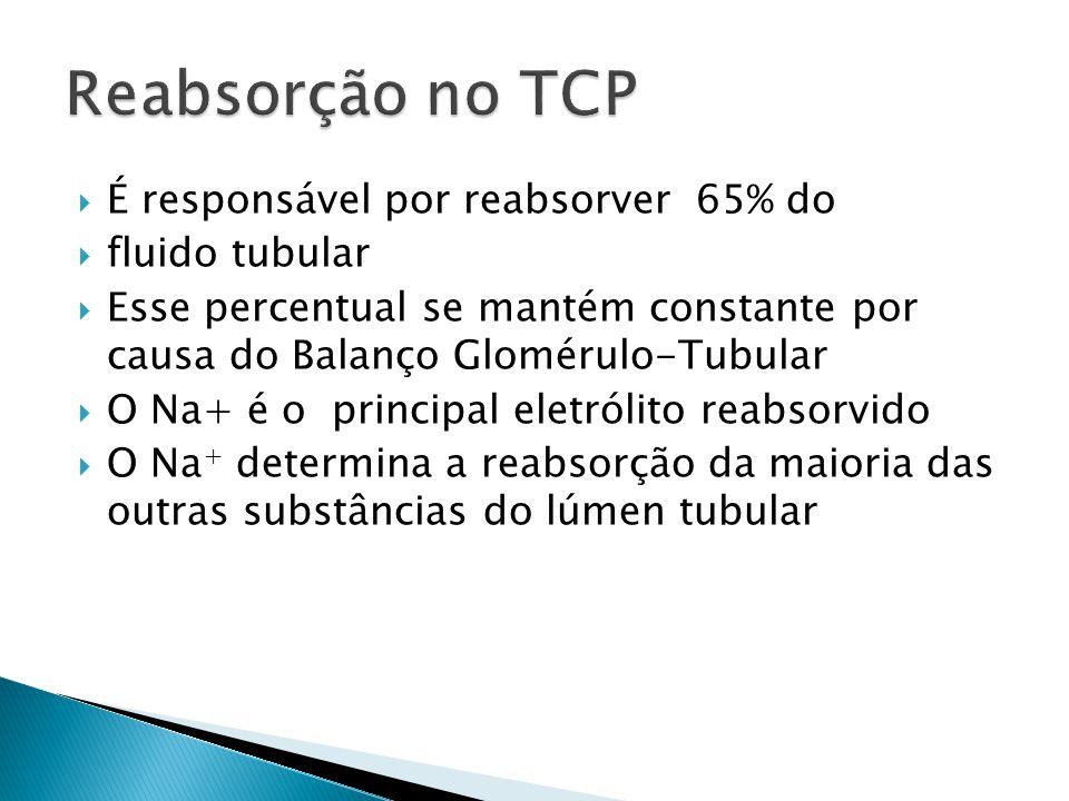 É responsável por reabsorver 65% do fluido tubular Esse percentual se mantém constante por causa do Balanço Glomérulo-Tubular O Na+ é o principal eletrólito reabsorvido O Na + determina a reabsorção da maioria das outras substâncias do lúmen tubular