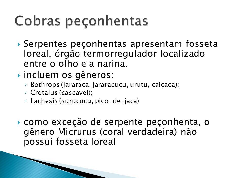 Eventos que ocorrem nos Néfrons para a formação da urina Filtração Glomerular Reabsorção Secreção
