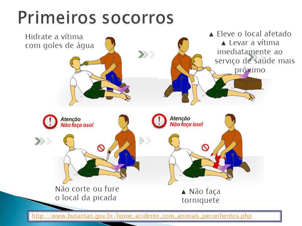 Identificação 46% do total de acidentes ofídicos com os que procuram a Unidade de Emergência são causados por Cobras Não Venenosas AZEVEDO-MARQUES MM; CUPO P & HERING SE.