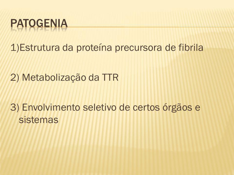 1)Estrutura da proteína precursora de fibrila 2) Metabolização da TTR 3) Envolvimento seletivo de certos órgãos e sistemas