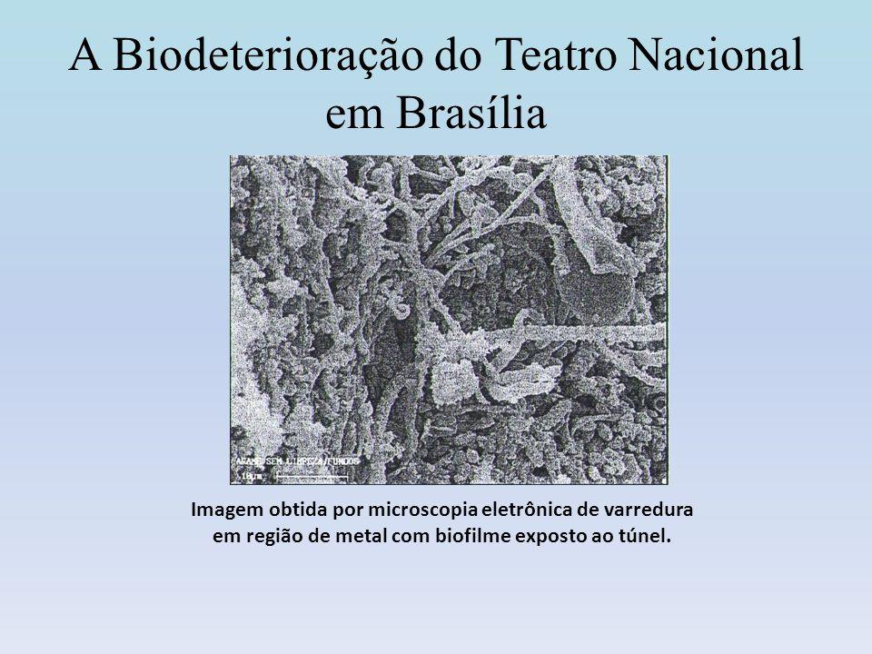 A Biodeterioração do Teatro Nacional em Brasília Imagem obtida por microscopia eletrônica de varredura em região de metal com biofilme exposto ao túne