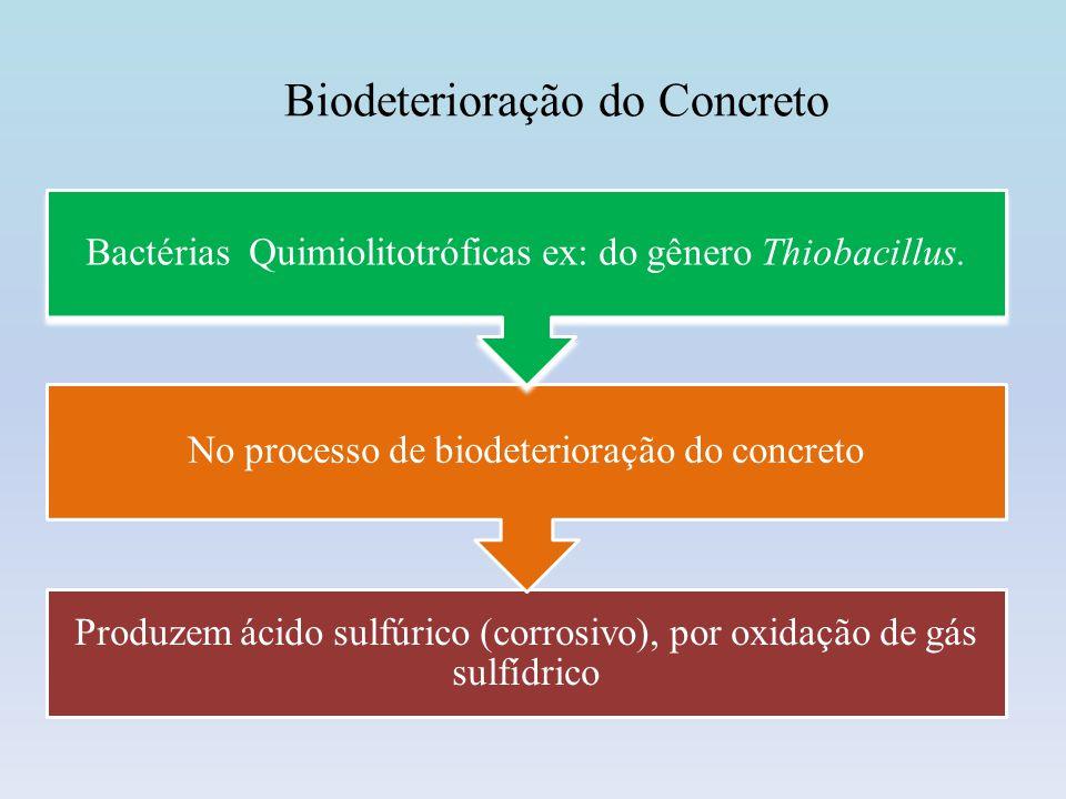 Biodeterioração do Concreto Região do concreto sem biofilme Região do concreto com biofilme Imagens obtidas por microscopia eletrônica de varredura
