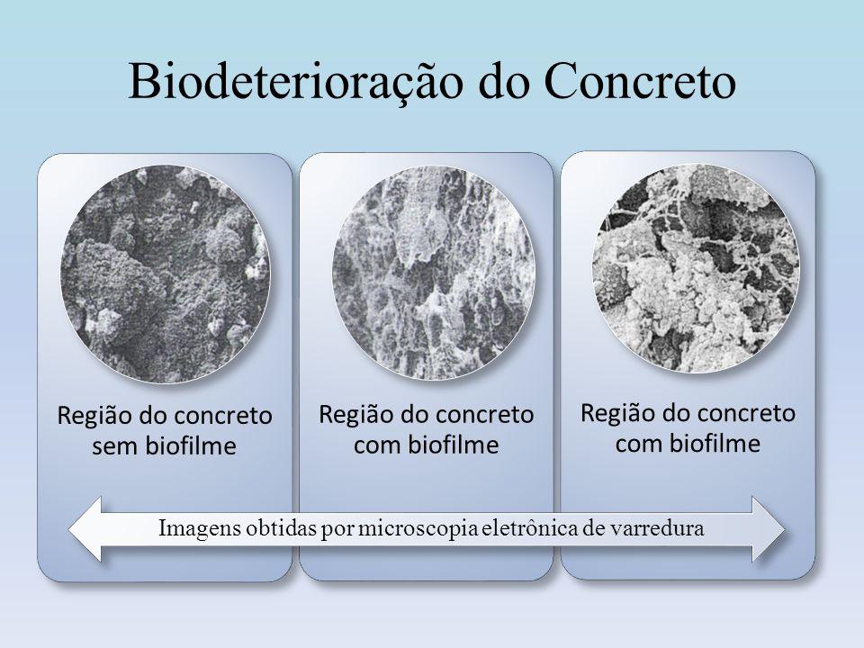 A Biodeterioração do Teatro Nacional em Brasília Imagem obtida por microscopia eletrônica de varredura em região de metal com biofilme exposto ao túnel.