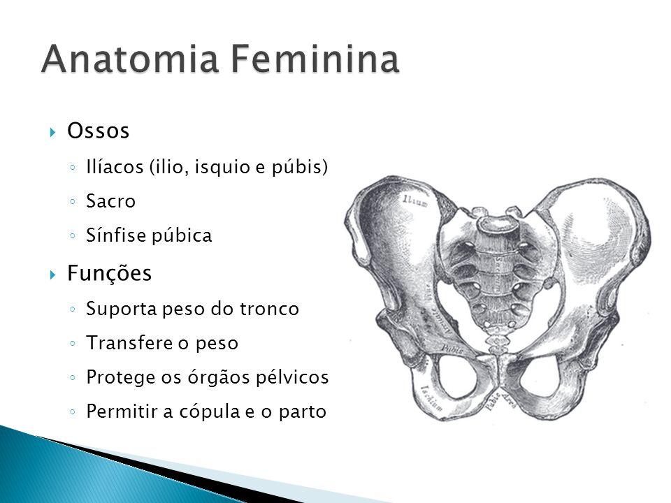 Ossos Ilíacos (ilio, isquio e púbis) Sacro Sínfise púbica Funções Suporta peso do tronco Transfere o peso Protege os órgãos pélvicos Permitir a cópula e o parto
