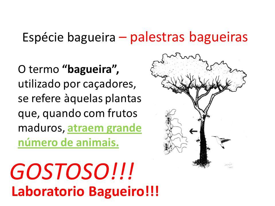 Espécie bagueira – palestras bagueiras O termo bagueira, utilizado por caçadores, se refere àquelas plantas que, quando com frutos maduros, atraem gra