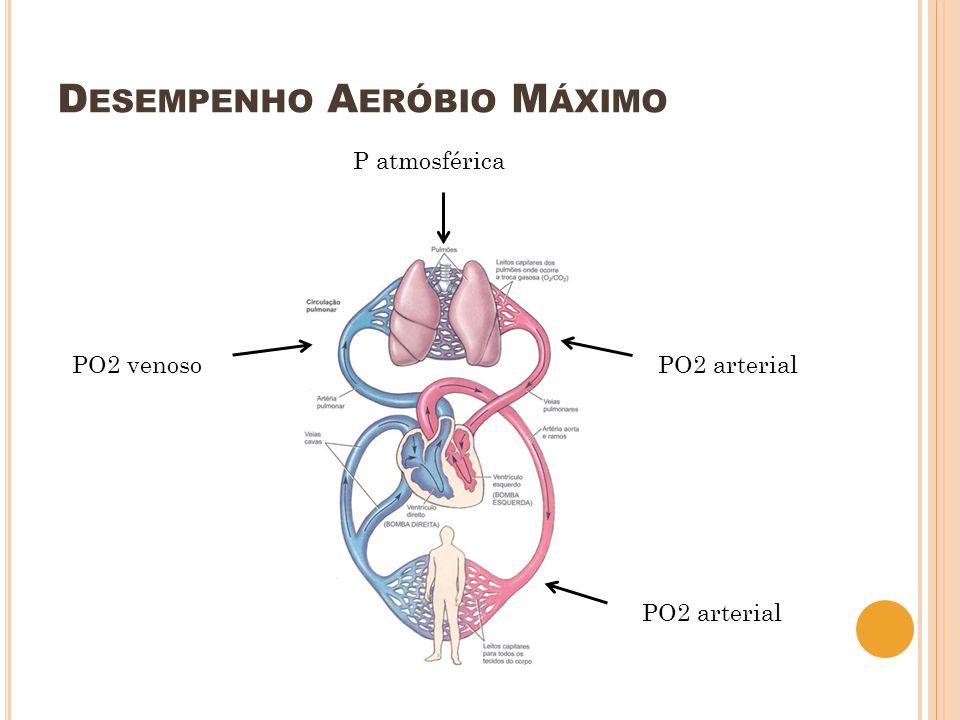 D ESEMPENHO A ERÓBIO M ÁXIMO PO2 arterial PO2 venoso P atmosférica