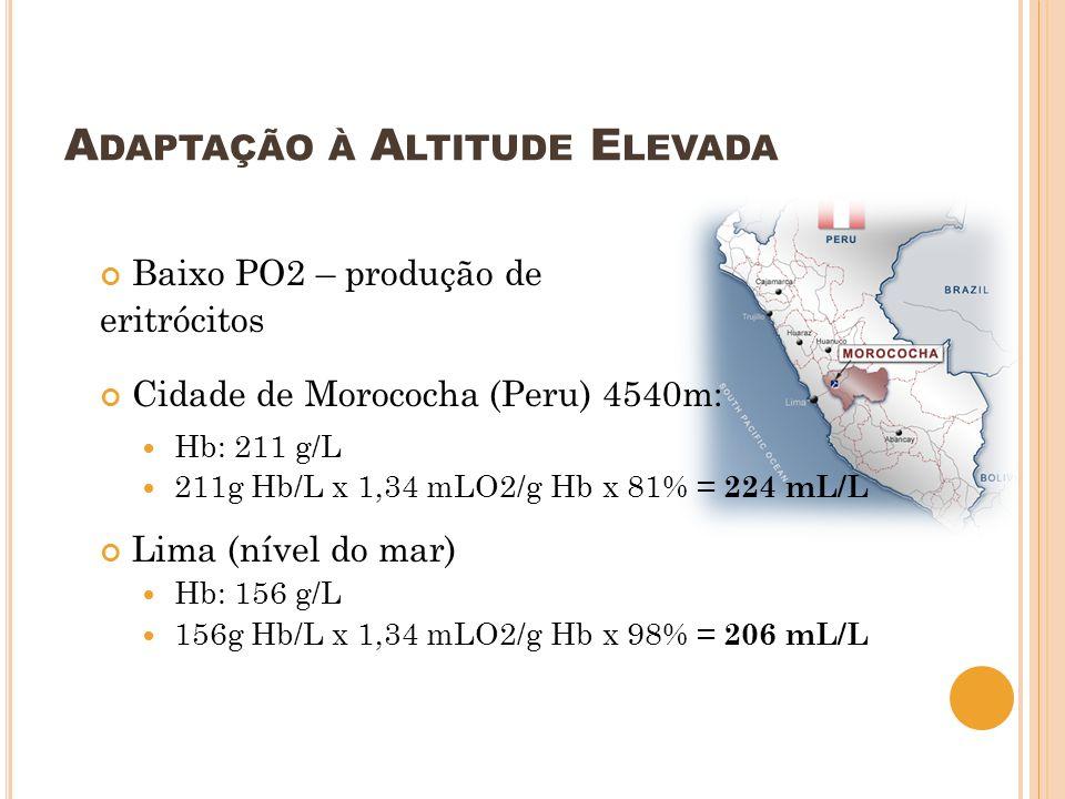 A DAPTAÇÃO À A LTITUDE E LEVADA Baixo PO2 – produção de eritrócitos Cidade de Morococha (Peru) 4540m: Hb: 211 g/L 211g Hb/L x 1,34 mLO2/g Hb x 81% = 2
