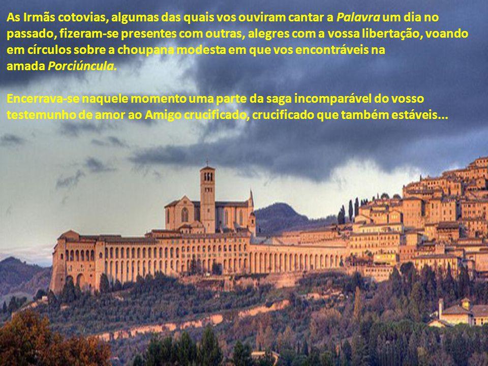 Pai Francisco! Abençoai-nos! Evocando aquela tarde de 4 de outubro de 1226, com céu transparente e azulado, há setecentos e oitenta e quatro anos, trê
