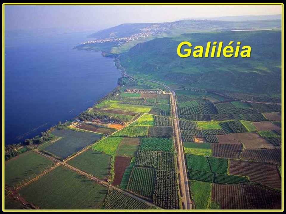 A água e o Vinho As Bodas em Caná na Galiléia nos revela dois aspectos: O real e o figurado. João 2:1-10 Ligue o som Avanço Manual