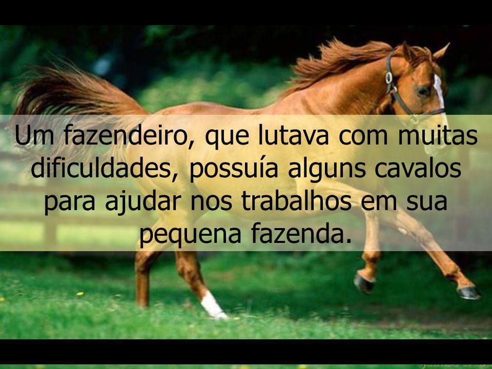 O fazendeiro e o cavalo