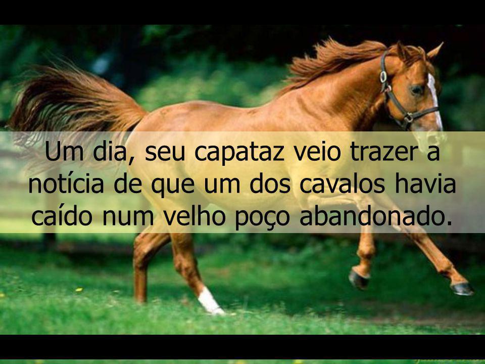 Um fazendeiro, que lutava com muitas dificuldades, possuía alguns cavalos para ajudar nos trabalhos em sua pequena fazenda.