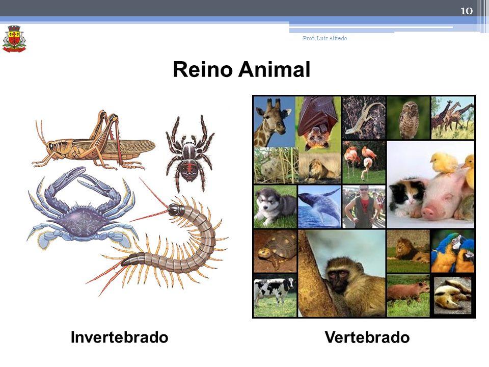 10 Prof. Luiz Alfredo Reino Animal Invertebrado Vertebrado
