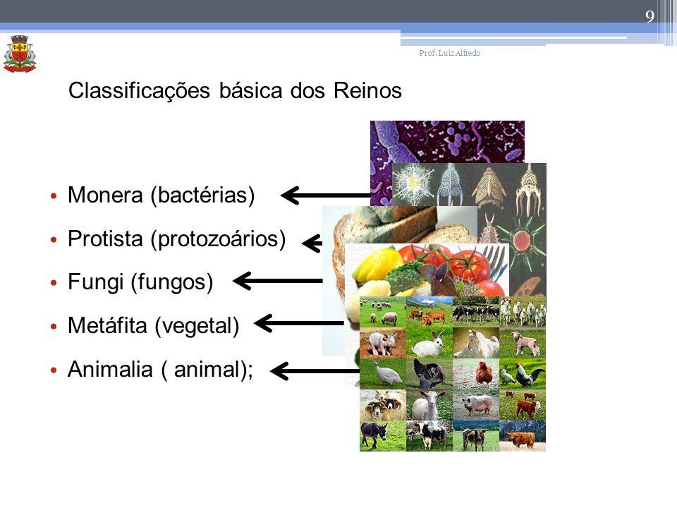 9 Classificações básica dos Reinos Monera (bactérias) Protista (protozoários) Fungi (fungos) Metáfita (vegetal) Animalia ( animal);