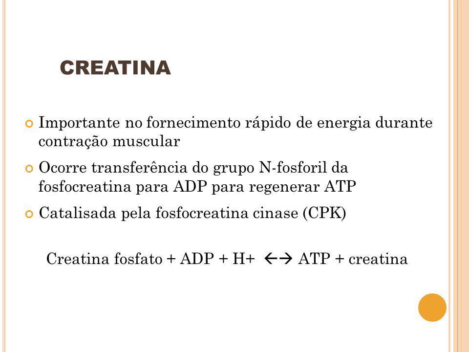 CREATINA Importante no fornecimento rápido de energia durante contração muscular Ocorre transferência do grupo N-fosforil da fosfocreatina para ADP pa