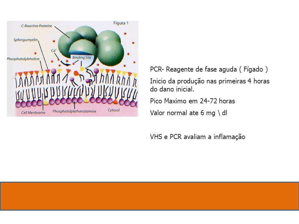 PCR- Reagente de fase aguda ( Fígado ) Inicio da produção nas primeiras 4 horas do dano inicial. Pico Maximo em 24-72 horas Valor normal ate 6 mg \ dl