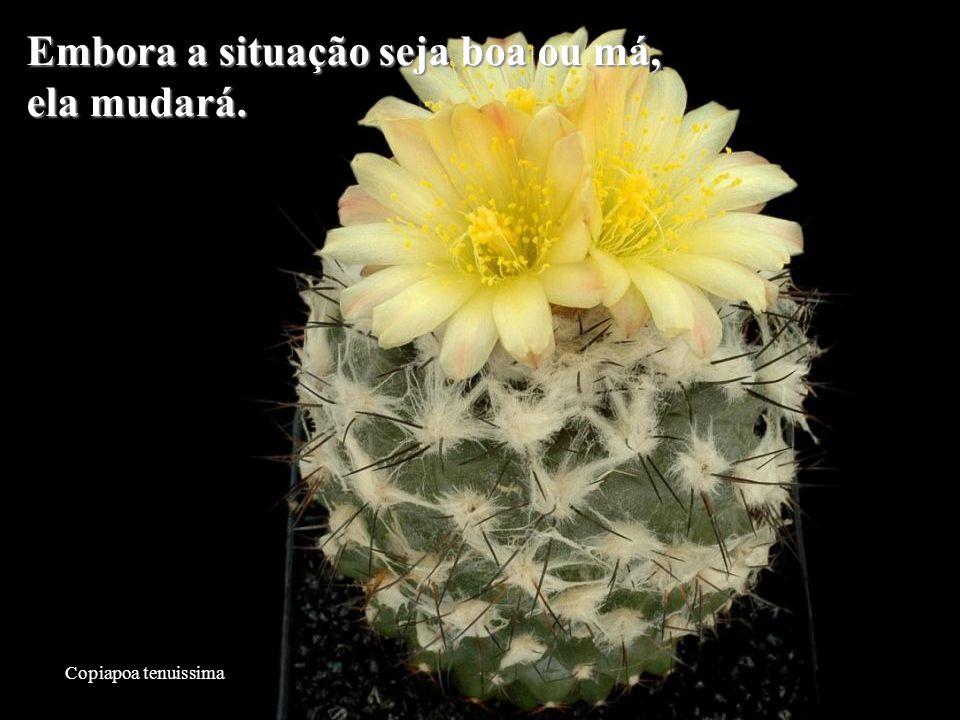 Mammillaria slevinii Aquilo que os outros pensam de si não é da sua conta.