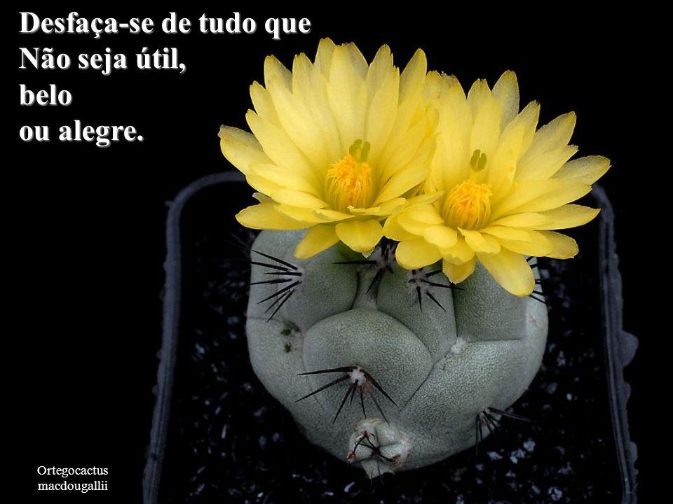 Copiapoa tenuissima Embora a situação seja boa ou má, ela mudará.