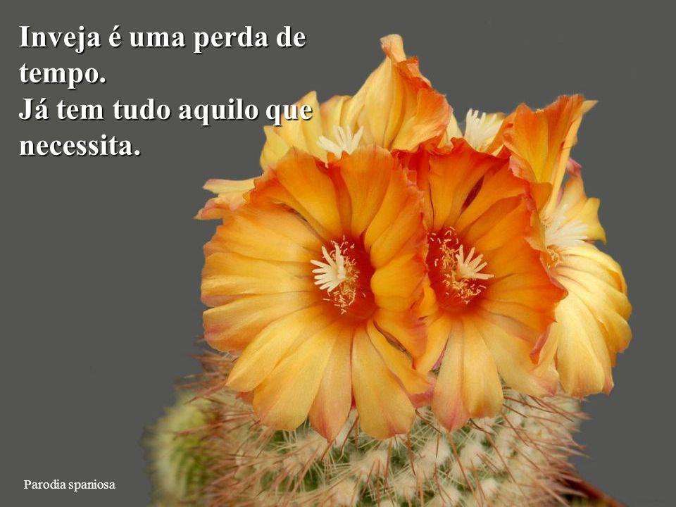 Ortegocactus macdougallii Desfaça-se de tudo que Não seja útil, belo ou alegre.