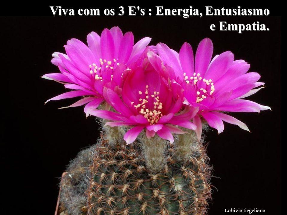 Lobivia tiegeliana Viva com os 3 E s : Energia, Entusiasmo e Empatia.