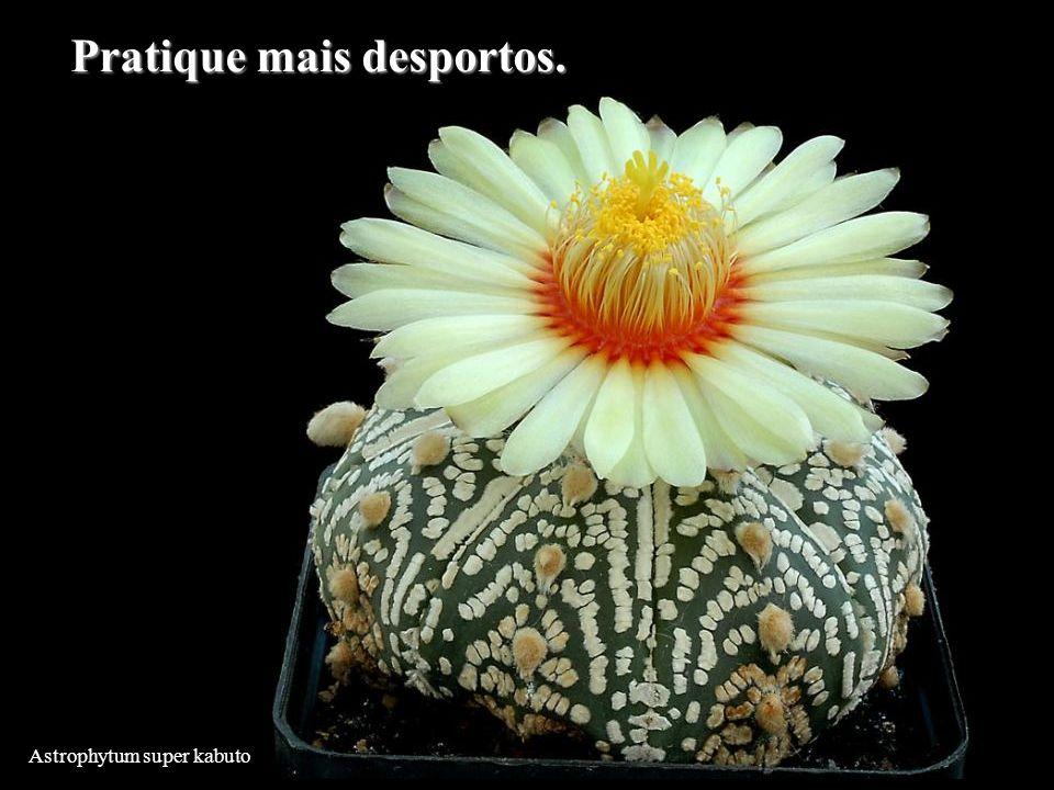 Astrophytum super kabuto Pratique mais desportos.