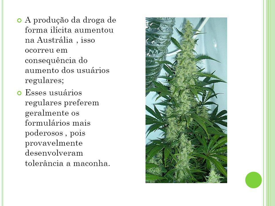 A produção da droga de forma ilícita aumentou na Austrália, isso ocorreu em consequência do aumento dos usuários regulares; Esses usuários regulares p
