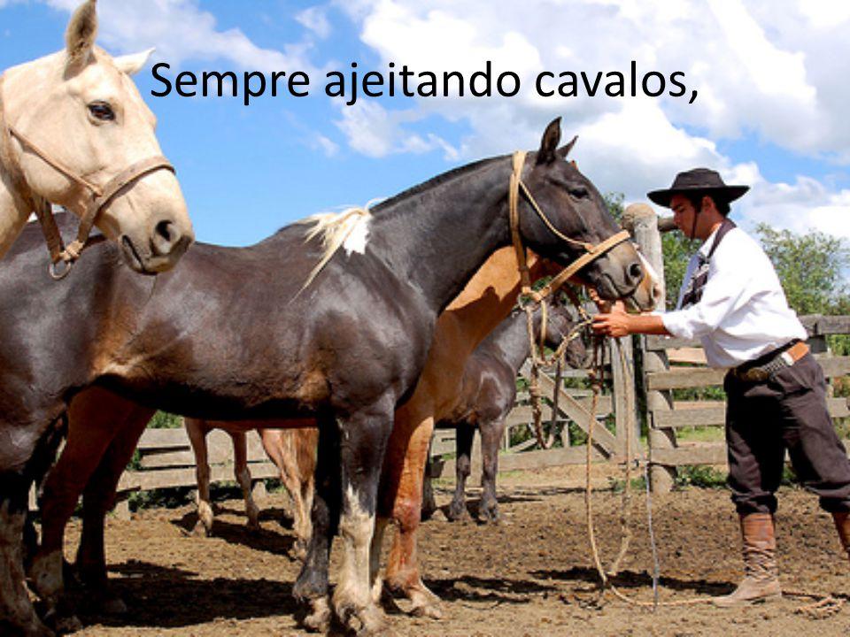 Sempre ajeitando cavalos,