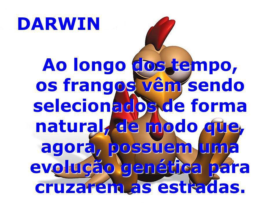 DARWIN Ao longo dos tempo, os frangos vêm sendo selecionados de forma natural, de modo que, agora, possuem uma evolução genética para cruzarem as estr
