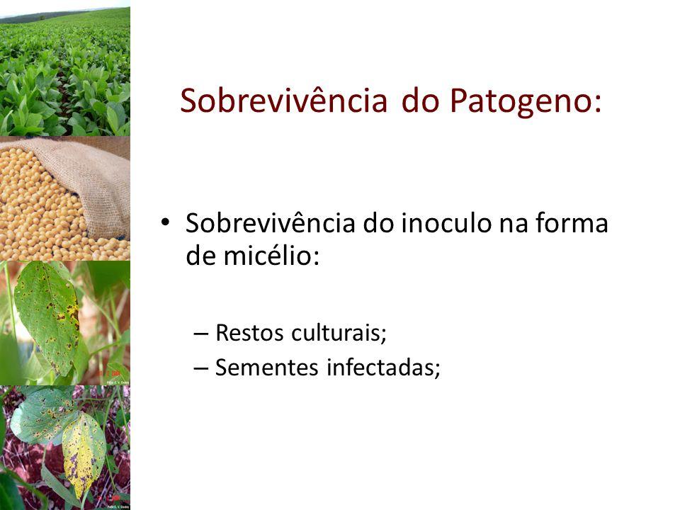 Sobrevivência do Patogeno: Sobrevivência do inoculo na forma de micélio: – Restos culturais; – Sementes infectadas;