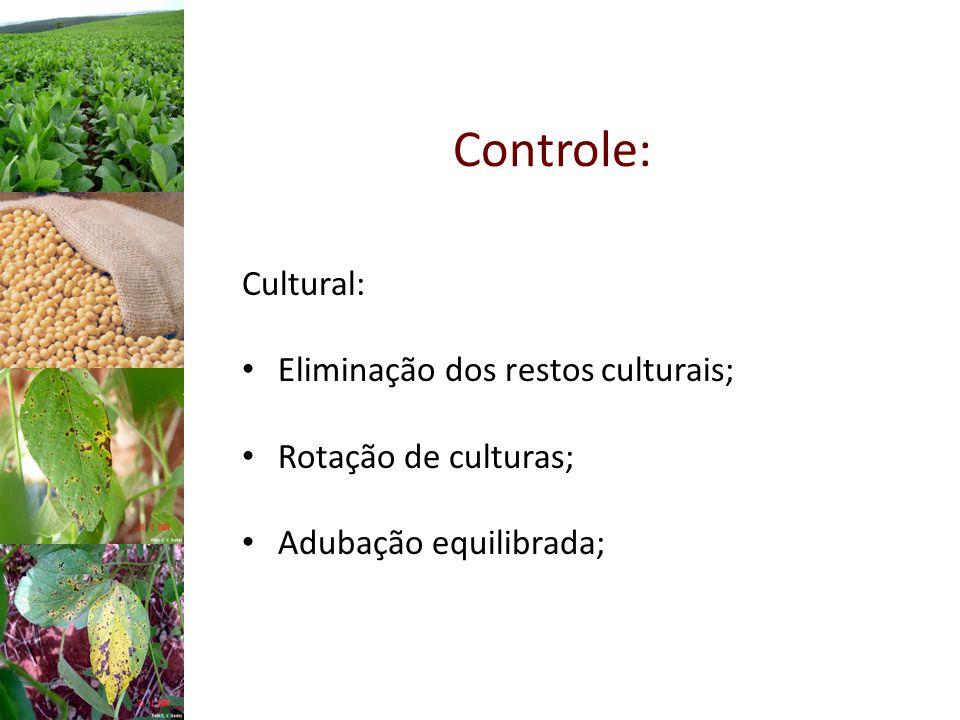 Controle: Cultural: Eliminação dos restos culturais; Rotação de culturas; Adubação equilibrada;