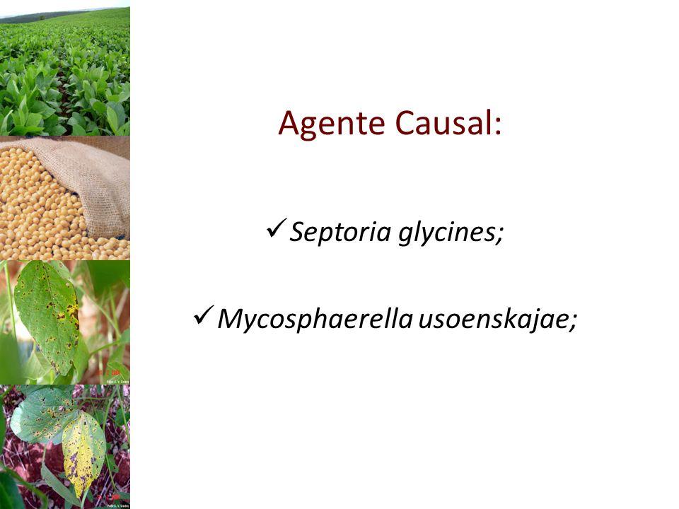Agente Causal: Septoria glycines; Mycosphaerella usoenskajae;