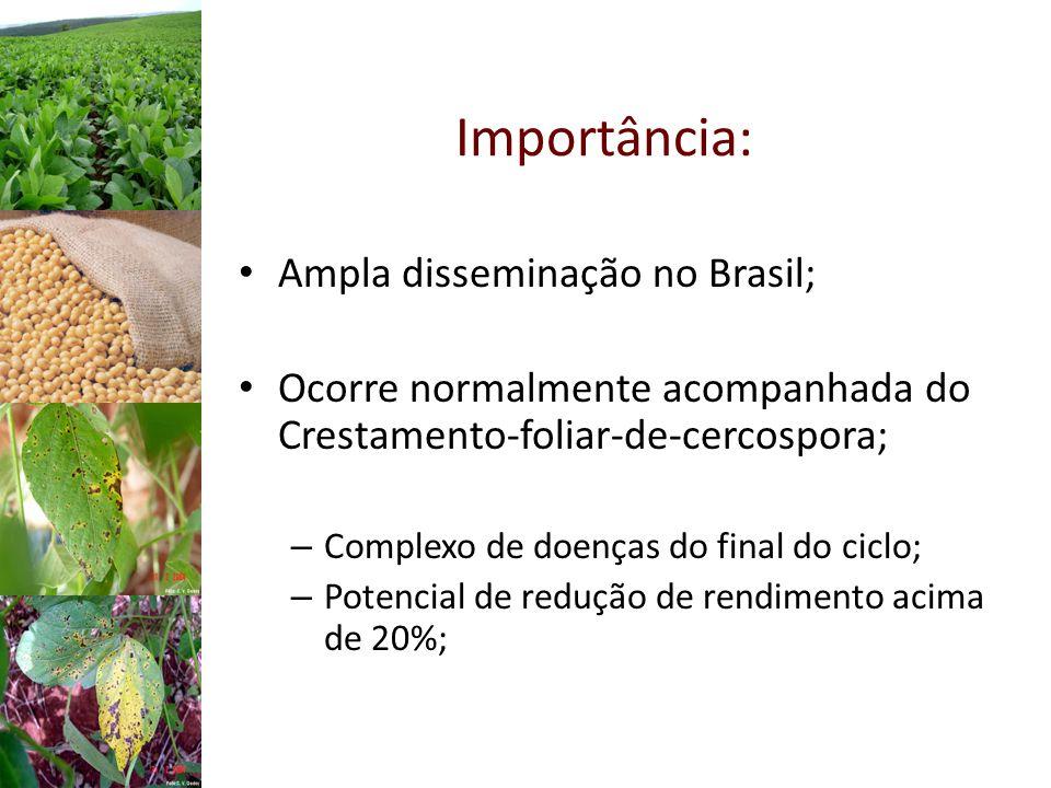 Importância: Ampla disseminação no Brasil; Ocorre normalmente acompanhada do Crestamento-foliar-de-cercospora; – Complexo de doenças do final do ciclo; – Potencial de redução de rendimento acima de 20%;