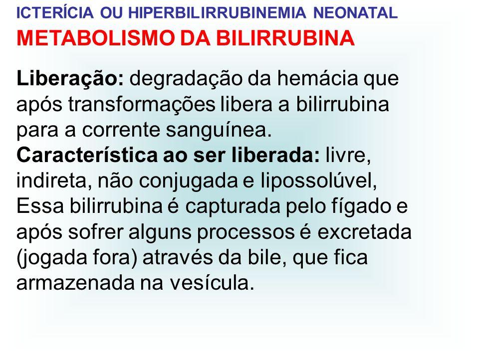 ICTERÍCIA OU HIPERBILIRRUBINEMIA NEONATAL METABOLISMO DA BILIRRUBINA Liberação: degradação da hemácia que após transformações libera a bilirrubina par