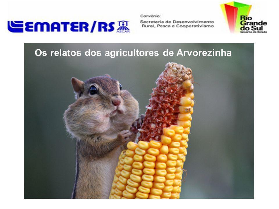 Os relatos dos agricultores de Arvorezinha