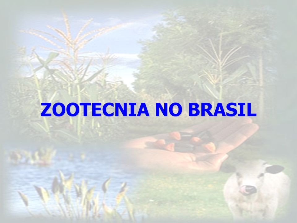 80,4% FONTE: Informativo CRMV-SP nº28 – novdez 2005