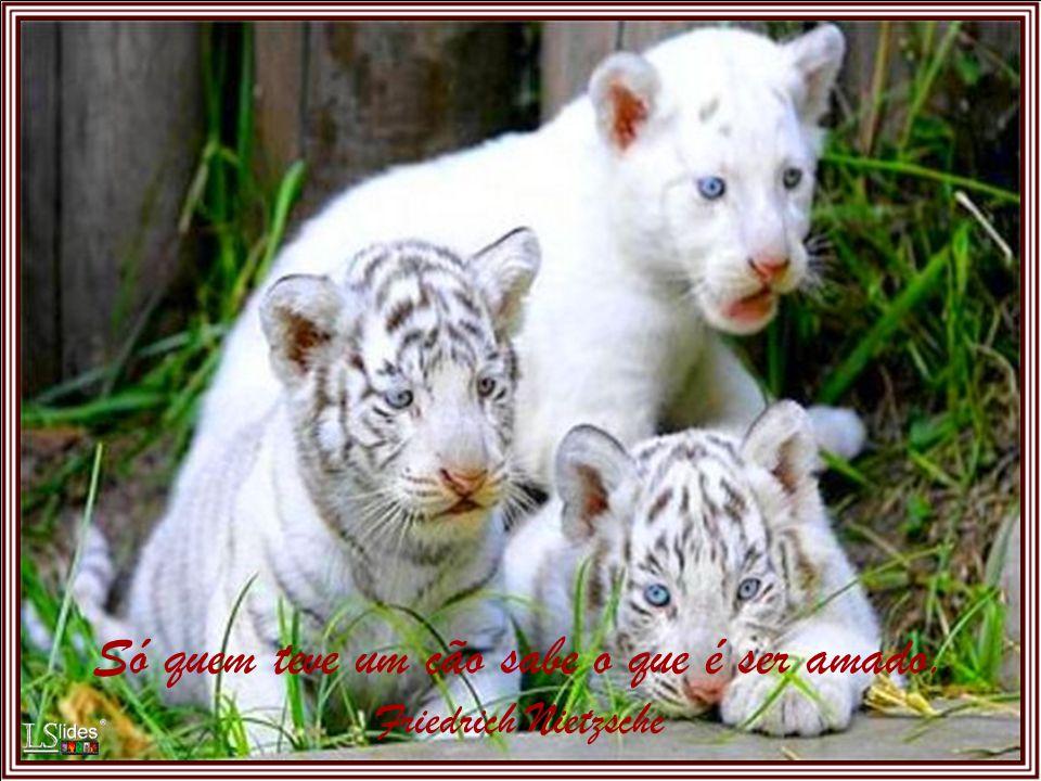 Os animais foram criados pela mesma mão caridosa de Deus que nos criou...