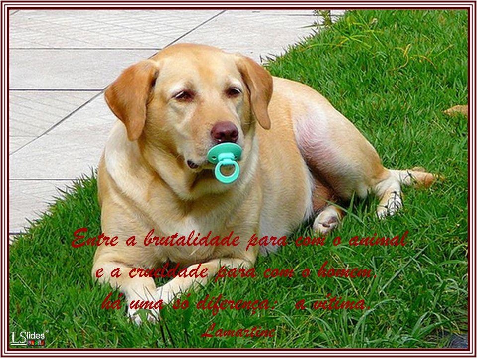 Falai aos animais, em lugar de lhes bater. Leon Tolstoi