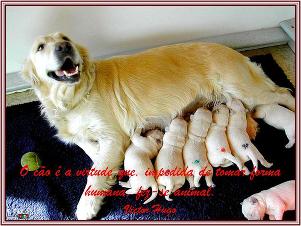 Ninguém se pode queixar da falta de um amigo, podendo ter um cão. Marquês de Maricá