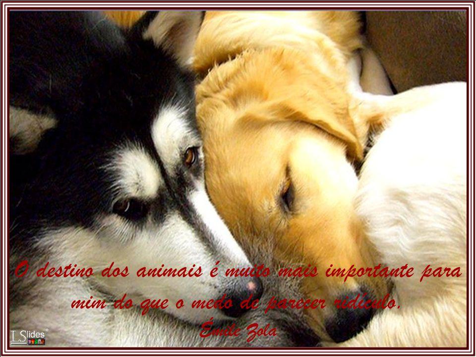 Maltratar animais é demonstrar covardia e ignorância. Leon Tolstoi