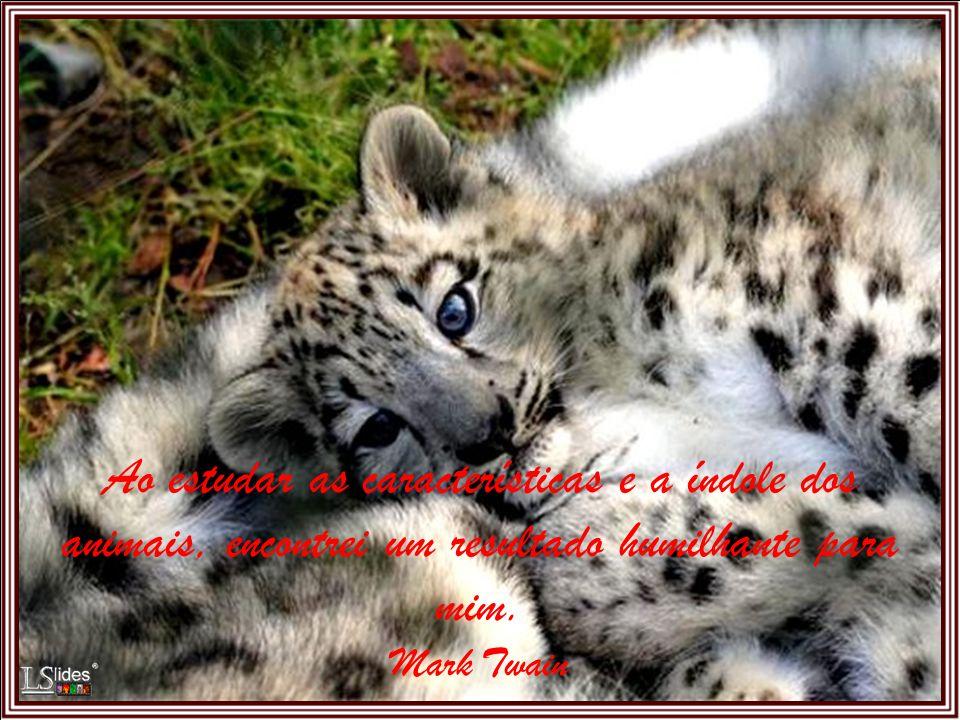 O destino dos animais é muito mais importante para mim do que o medo de parecer ridículo.