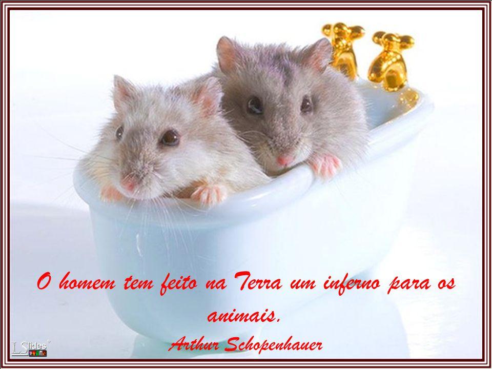 Quanto mais conheço os homens, mais estimo os animais. Alexandre Herculano